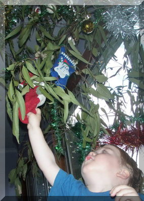 Decorating a gum tree for Christmas in Australia