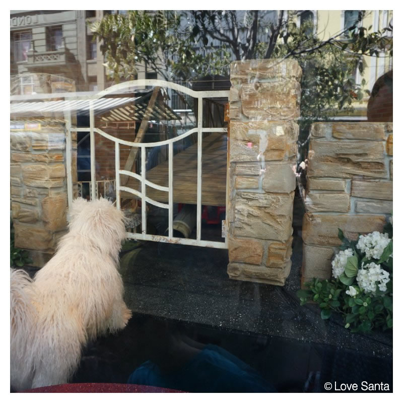 Little dog sitting in front of a gate in Myer window