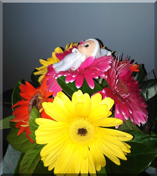 baby CHristmas elf lying on a pink gerbera amongst other gerneras